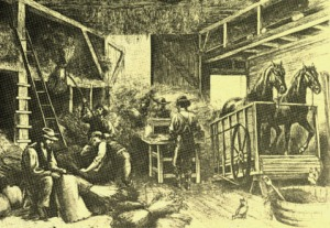 A horse-powered threshing machine in operation